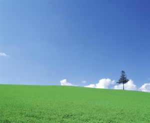 Single Tree in a Green Field