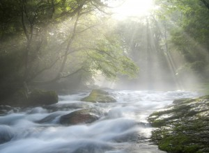Cascading Stream under Sunlight in Forest