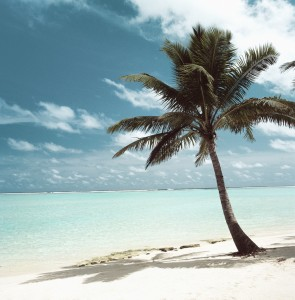 Palm Tree on a Beach