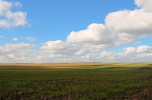rural-field-1363007270Ngv
